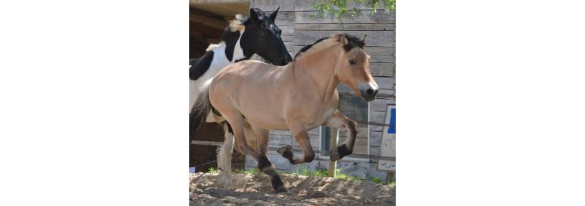 Produits 100% naturels pour la mobilité articulaire et musculaire de vos chevaux